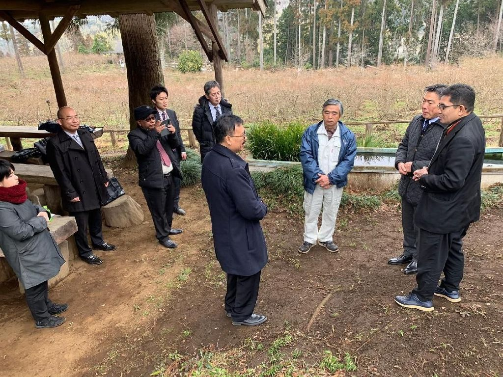 RI-Jepang Kerja Sama Budidaya Blueberry Kisazaru Organik