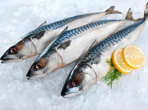 Ikan makarel/