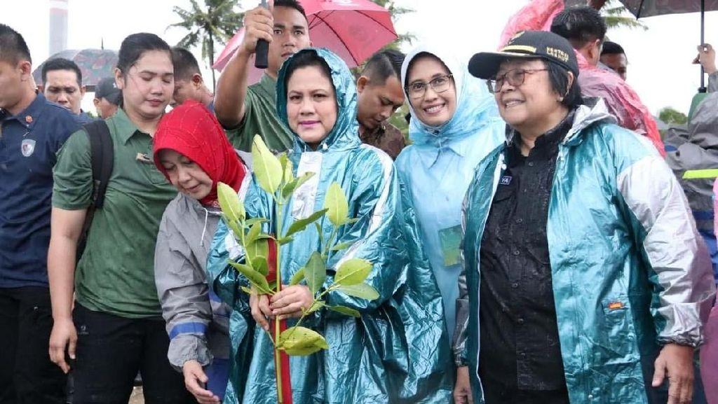 Ibu Negara Tanam Mangrove di Labuan Banten