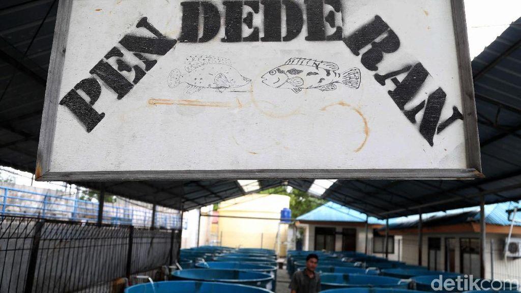 Mengintip Proses Pelestarian Bibit Benih Ikan di Pulau Tidung