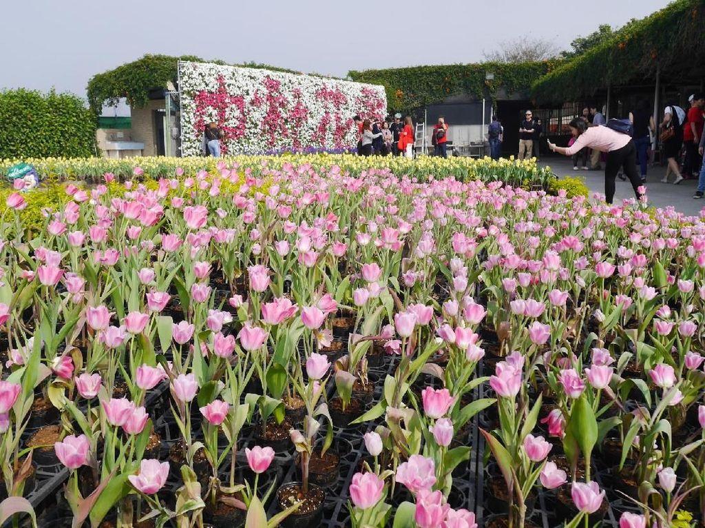 Foto: Biar Senang, Ajak Mama ke Kebun Tulip Ini