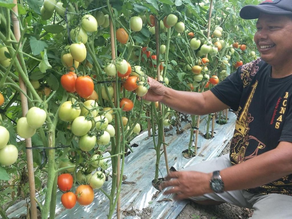 Pasca Gempa, Petani di Palu Bangun Desa Hortikultura