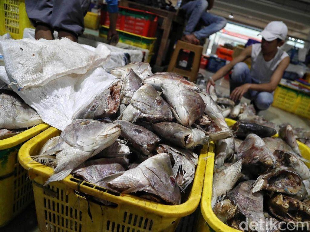 Airnya Tercemar Paracetamol, Ikan dari Laut Jakarta Aman Dikonsumsi?