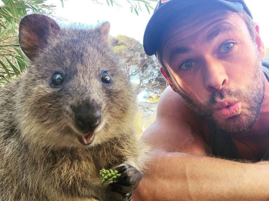 Australia dan Hewan Paling Bahagia di Bumi