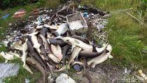 Seratusan Hiu di Penangkaran Ikan Karimunjawa Mati Mendadak