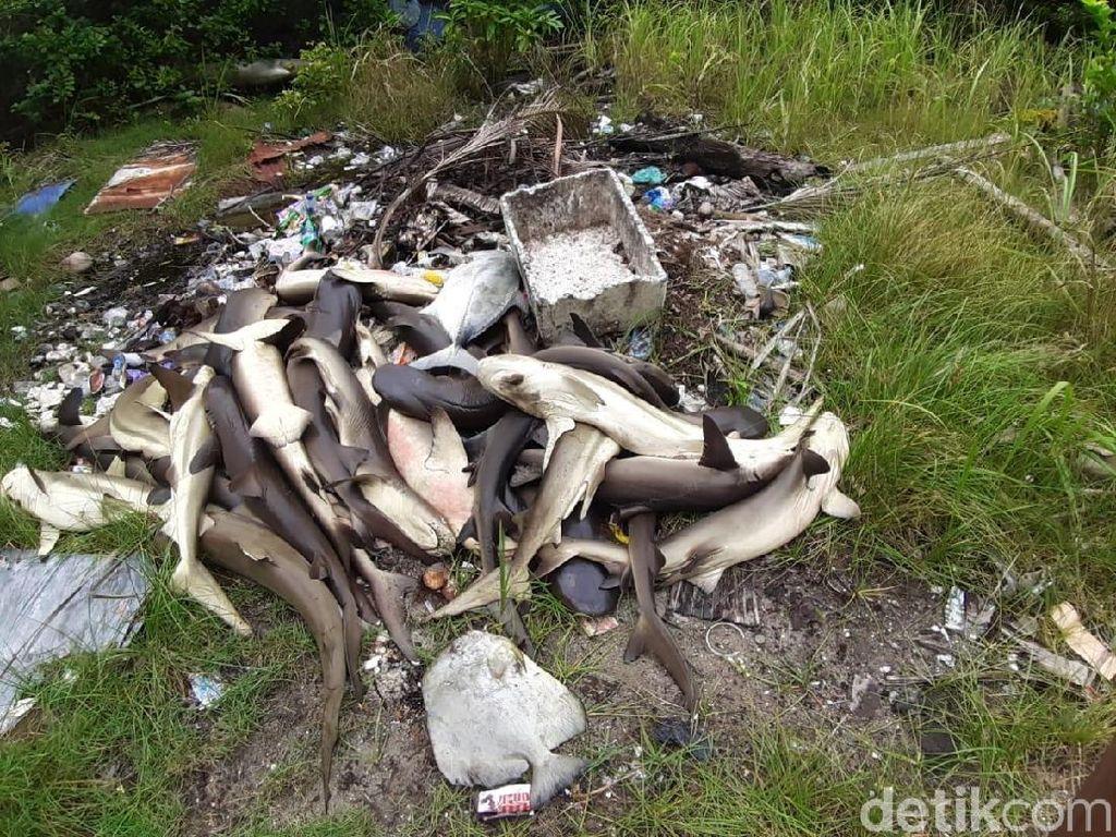 WWF Indonesia: Penyebab Kematian Massal Hiu di Karimunjawa Harus Dianalisis