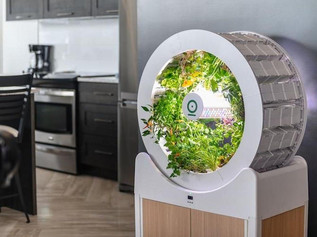 Canggih! Ini OGarden, Kebun Mini Modern Dalam Ruangan