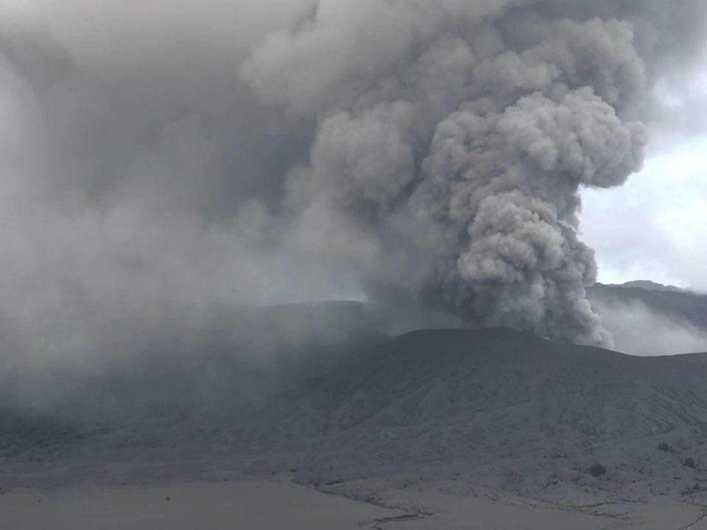 Hujan Abu Bromo Usir Kera Ekor Panjang dan Elang Jawa dari Habitatnya