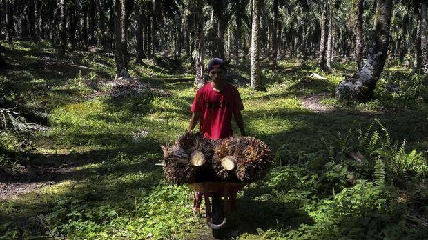 Menlu Prioritaskan Diplomasi Kepentingan Sawit Indonesia