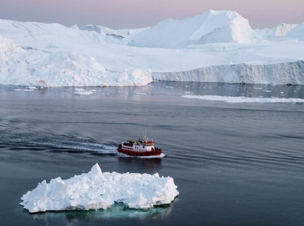 Ini Bukti Kalau Antartika Dulunya Hutan