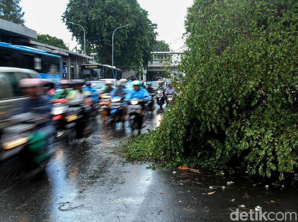 Pohon Tumbang di Jalan Kyai Tapa Jakbar Lalin Macet