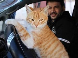 Kisah Mohammad Aljaleel, Pria Penyayang Kucing dari Aleppo Suriah