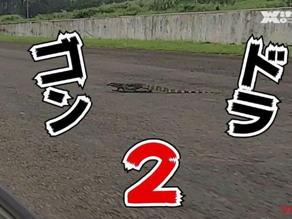 Biawak Nyebrang di Sirkuit Sentul Bikin Orang Jepang Kaget