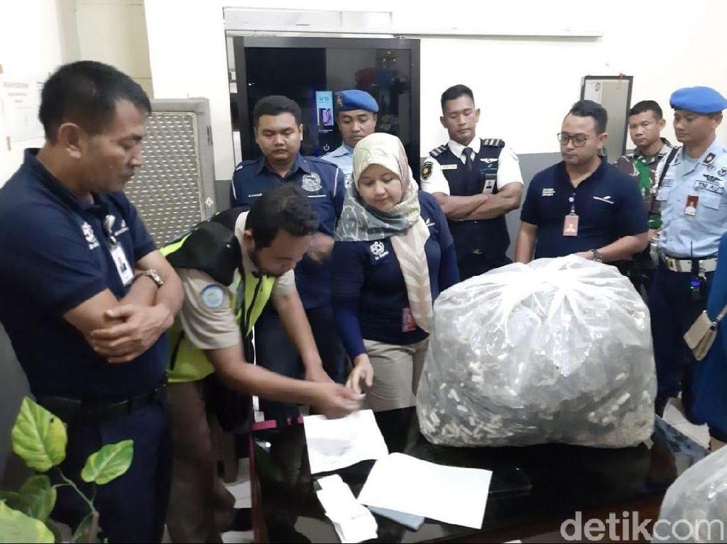Penyelundupan 7.040 Kuda Laut Kering dari Yogya ke Thailand Digagalkan