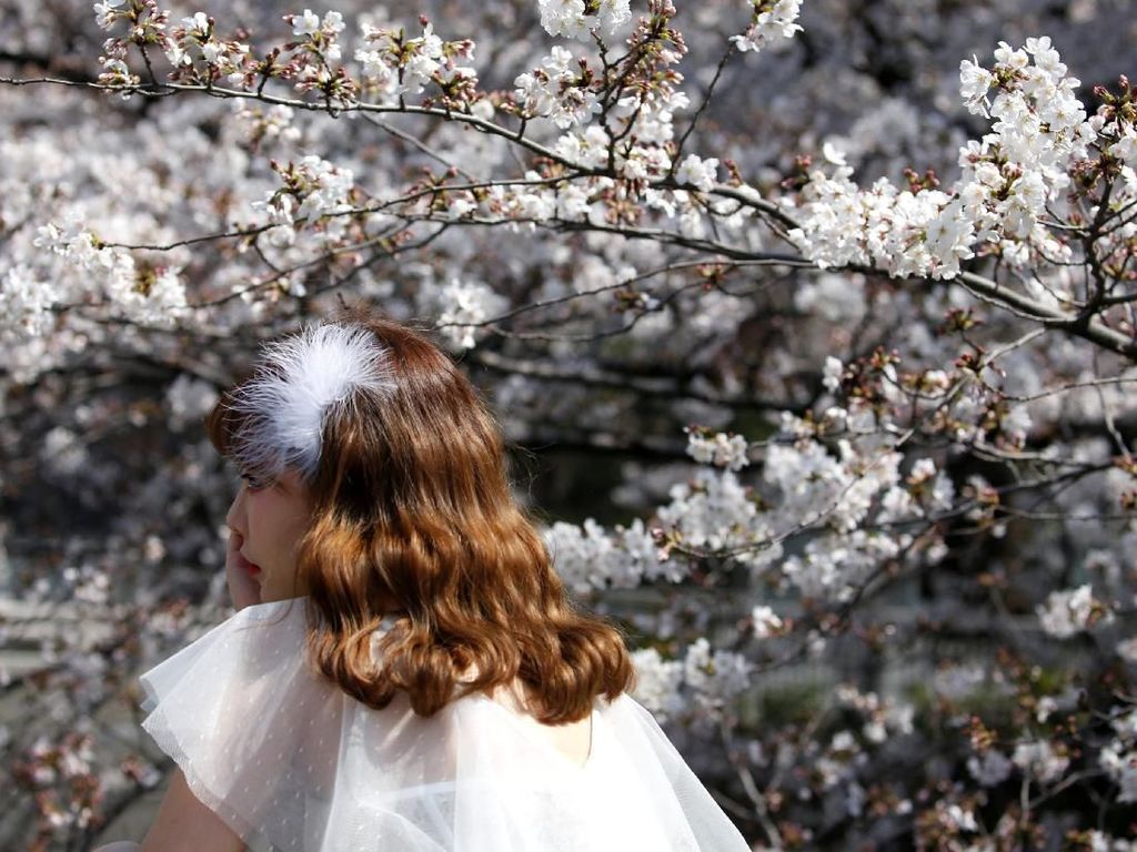 Menikmati Keindahan Bunga Sakura yang Bermekaran di Tokyo