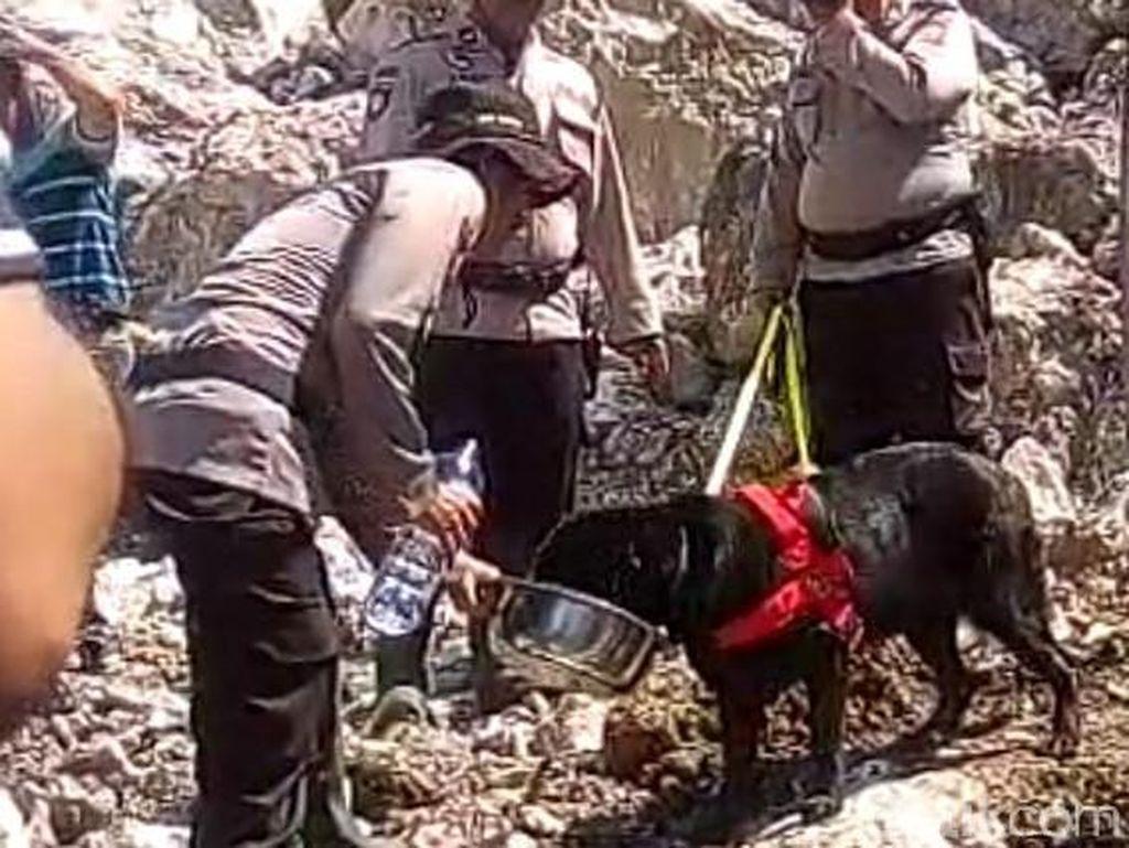 Anjing Pelacak Dikerahkan Bantu Temukan Korban Longsor di Jember