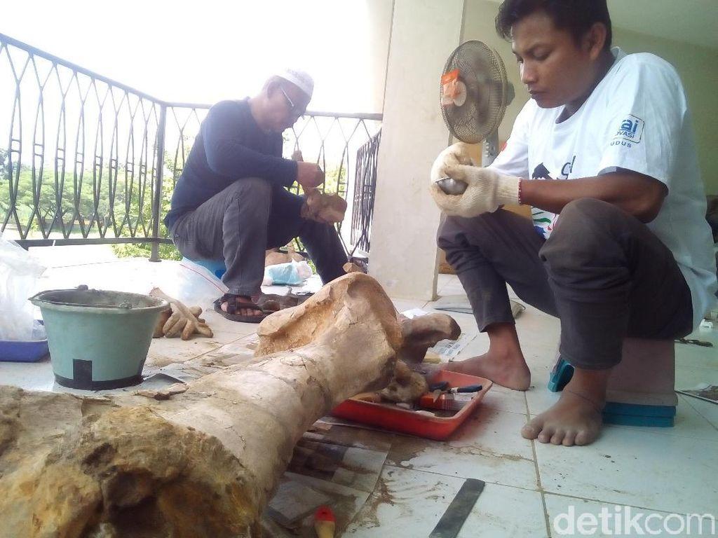 Tim Sangiran Konservasi 100 Fosil Museum Purbakala Patiayam