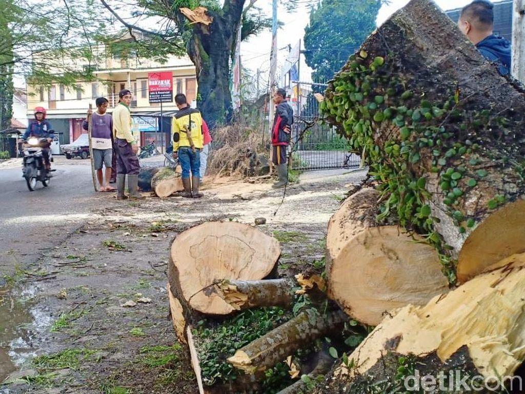 Dahan Tumbang Timpa Pengendara di Jalur Wisata Lembang