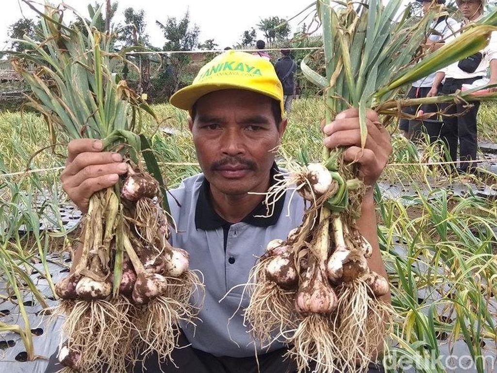 Beda Tito dan Syahrul soal Bisa Tidak RI Produksi Bawang Putih?