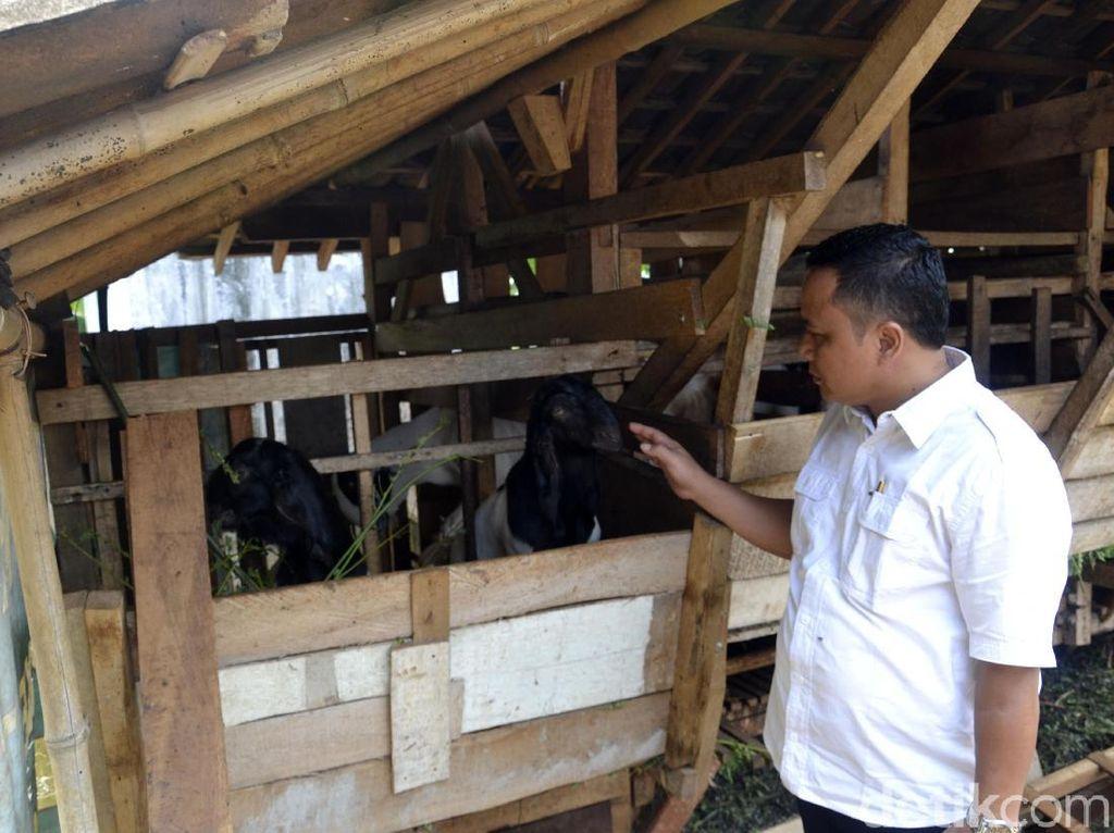 19 Ternak Kambing di Pekalongan Mati dengan Luka Gigitan di Leher