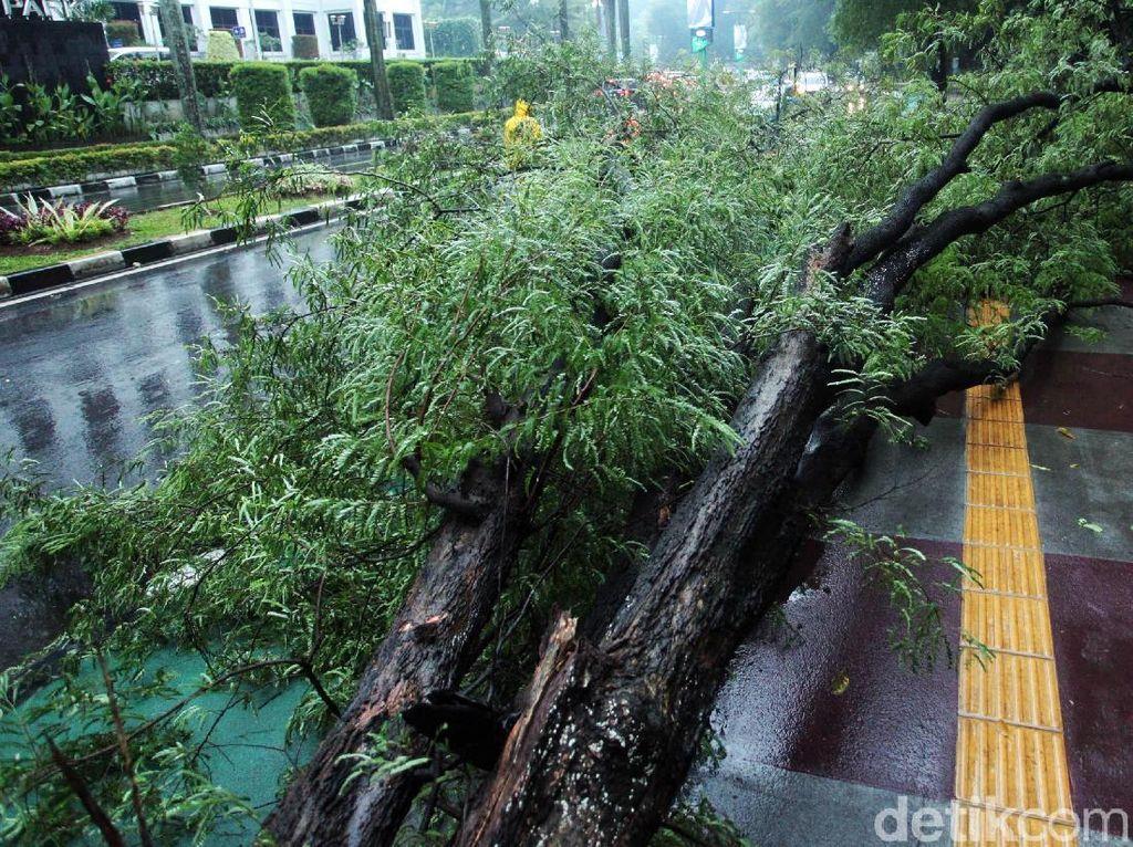 Hujan Angin Terjang Bogor, Puluhan Rumah Rusak!