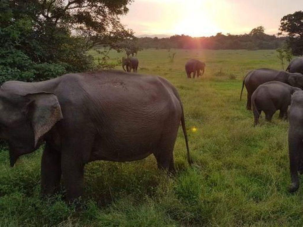Pemandu Wisata Sri Lanka Klaim Banyak Turis Australia Bosan ke Bali