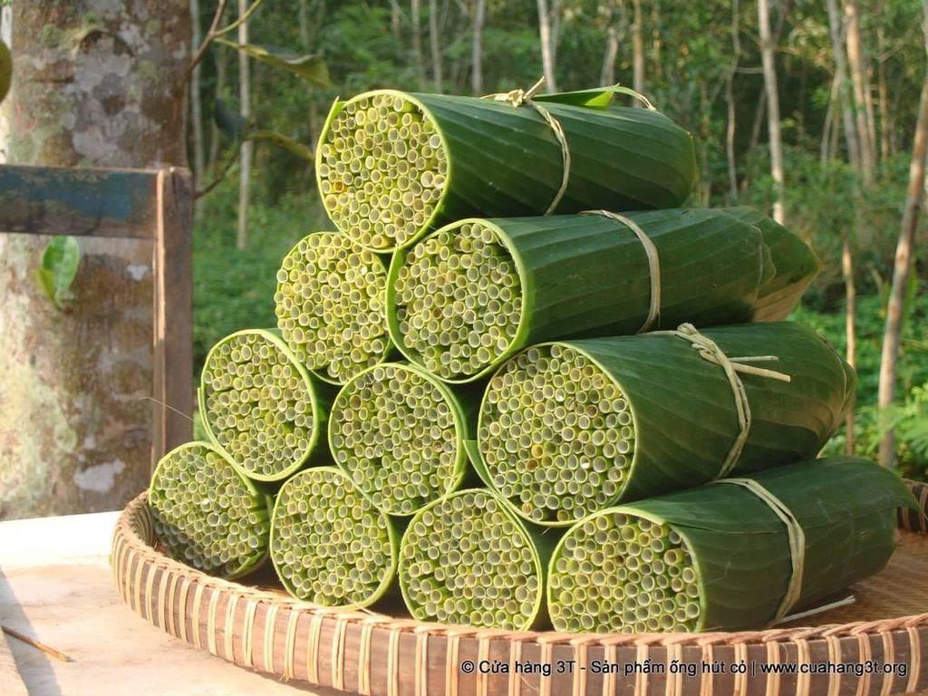 Keren! Ada Sedotan Ramah Lingkungan Berbahan Rumput Liar Vietnam