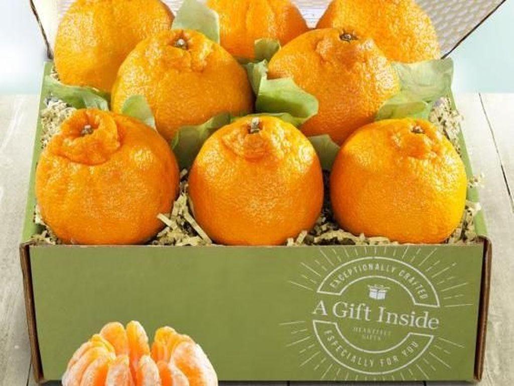Sumo Citrus, Jeruk Berukuran Jumbo Tanpa Biji yang Manis Segar