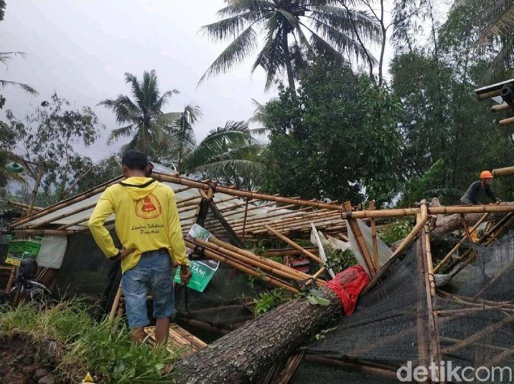 Hujan Deras dan Angin Kencang, Belasan Pohon di DIY Tumbang