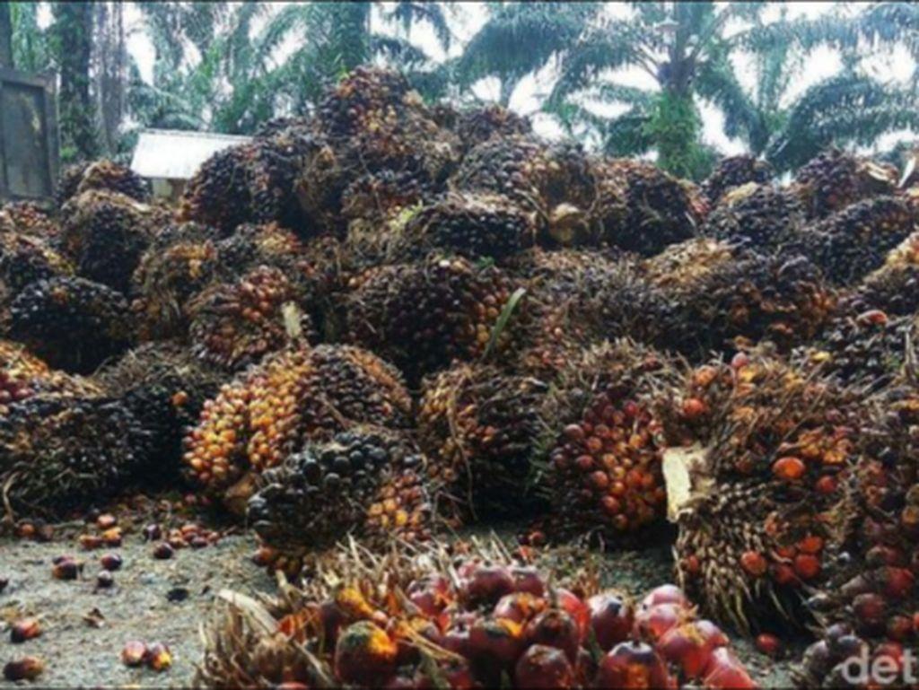 Ekspor Minyak Sawit RI Capai 2,96 Juta Ton
