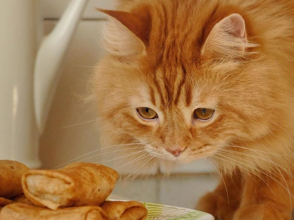 Lucunya Henry, Si Kucing Mirip Singa yang Doyan Makan