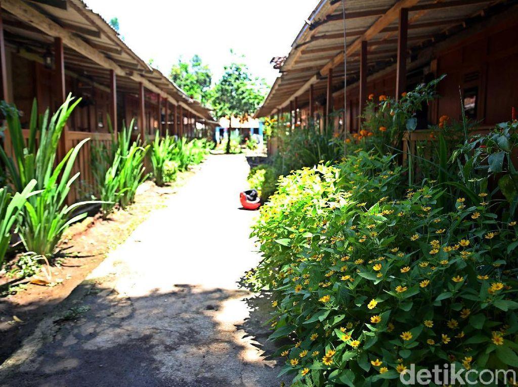 Foto: Cantiknya Desa Wisata Osing Kemiren di Banyuwangi