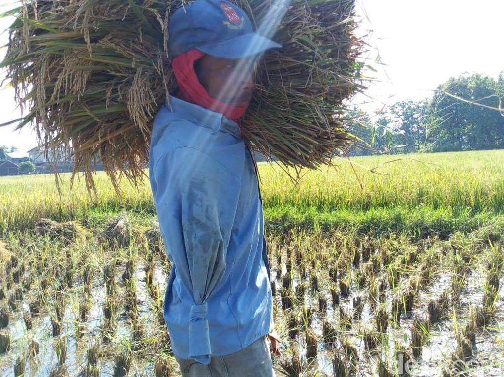 Slamet, Buruh Tani di Ponorogo yang Hanya Punya Satu Tangan