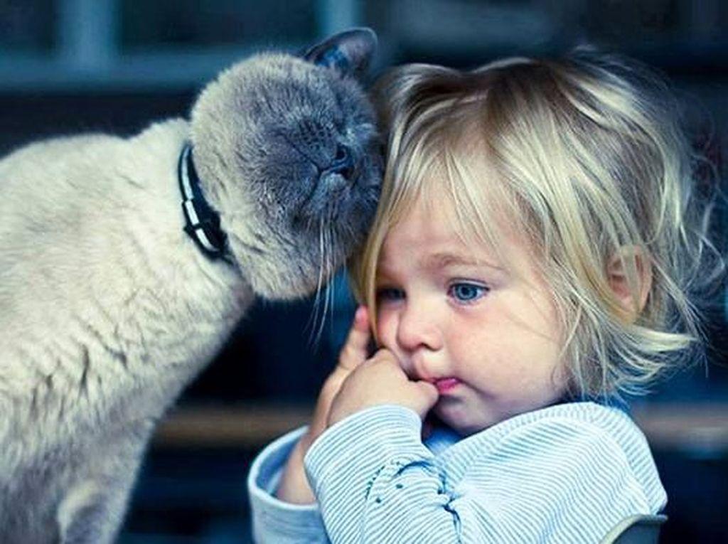 Disebut Pandji Hewan Gembel, Foto-foto Ini Bukti Menggemaskannya Kucing