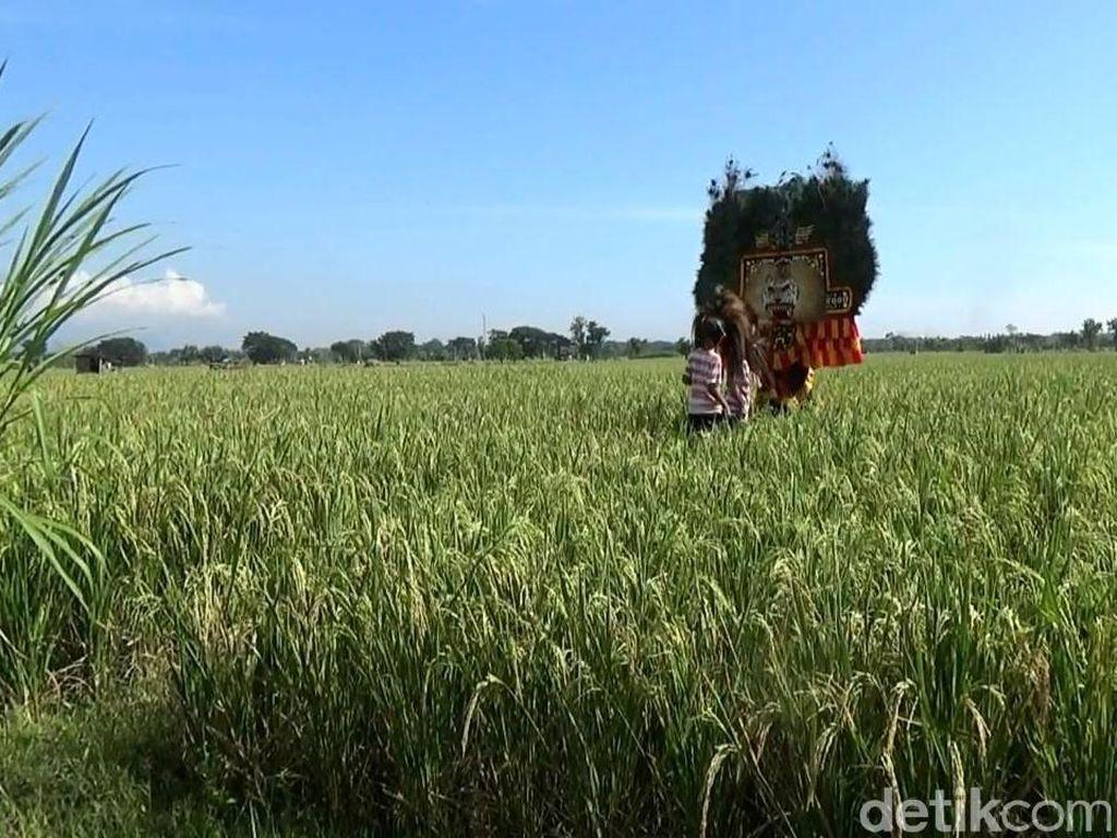 Punya Mesin Perontok Padi, Panen di Sumedang Capai 12 Ton/Hektare