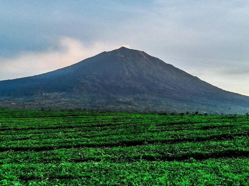 Foto: Gunung Tertinggi di Sumatera yang Pernah Didaki Jokowi