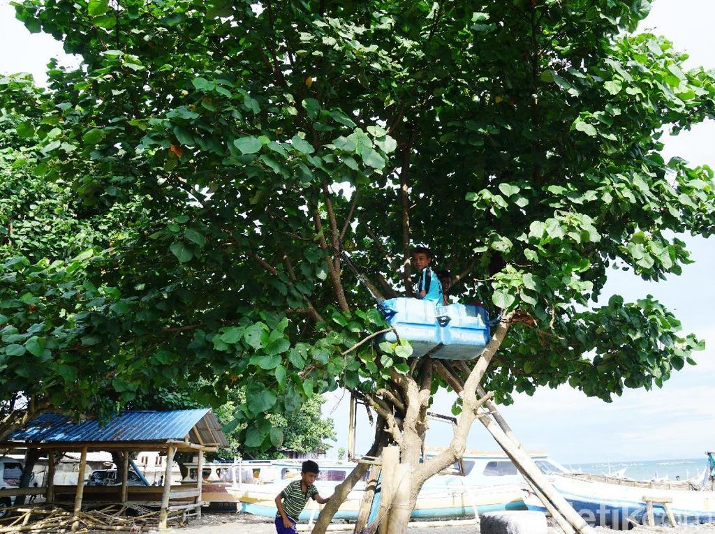 Rumah Pohon Ala Anak-anak Lombok, Bukti Bahagia Itu Sederhana