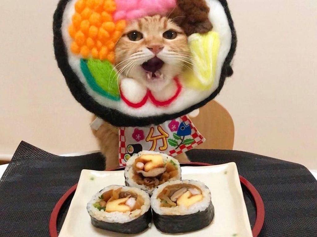 Gemasnya 8 Kostum Kucing Lucu yang Mirip Makanan Aslinya