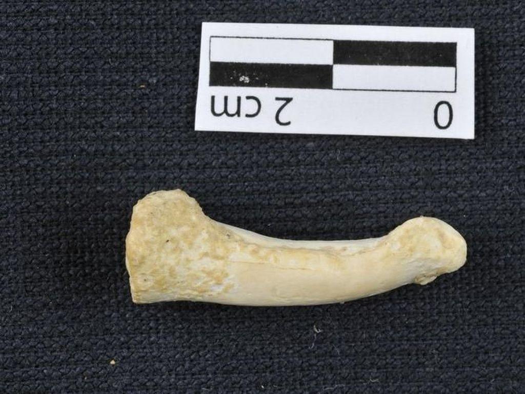 Homo Luzonensis, Spesies Manusia Telah Lama Punah Ditemukan di Filipina