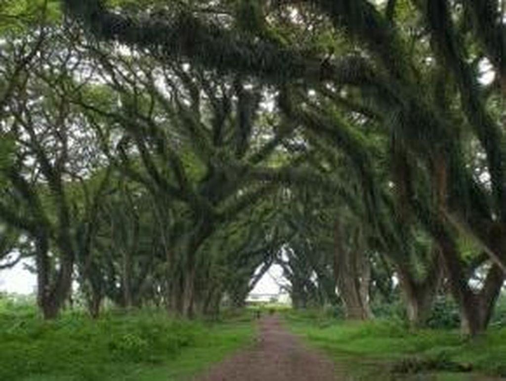 Hutan The Lord Of The Rings Ada di Banyuwangi