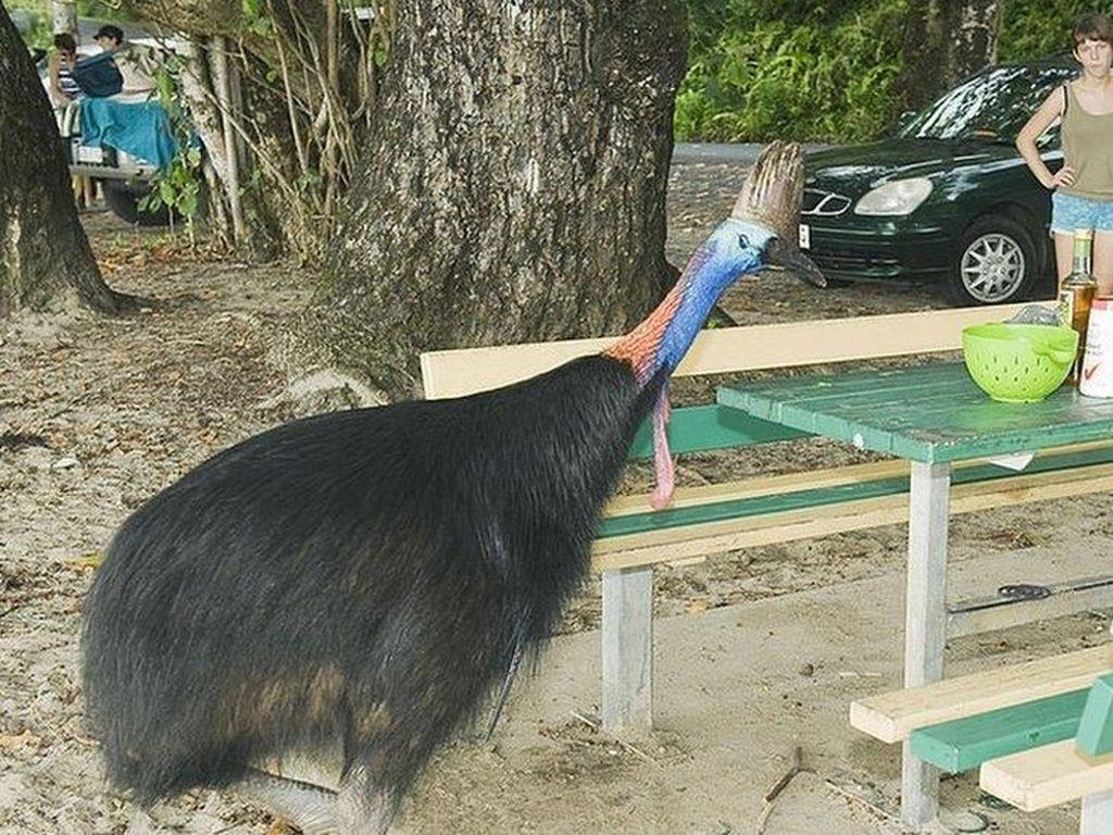 Pria di Florida Tewas Diserang Burung Kasuari Peliharaannya