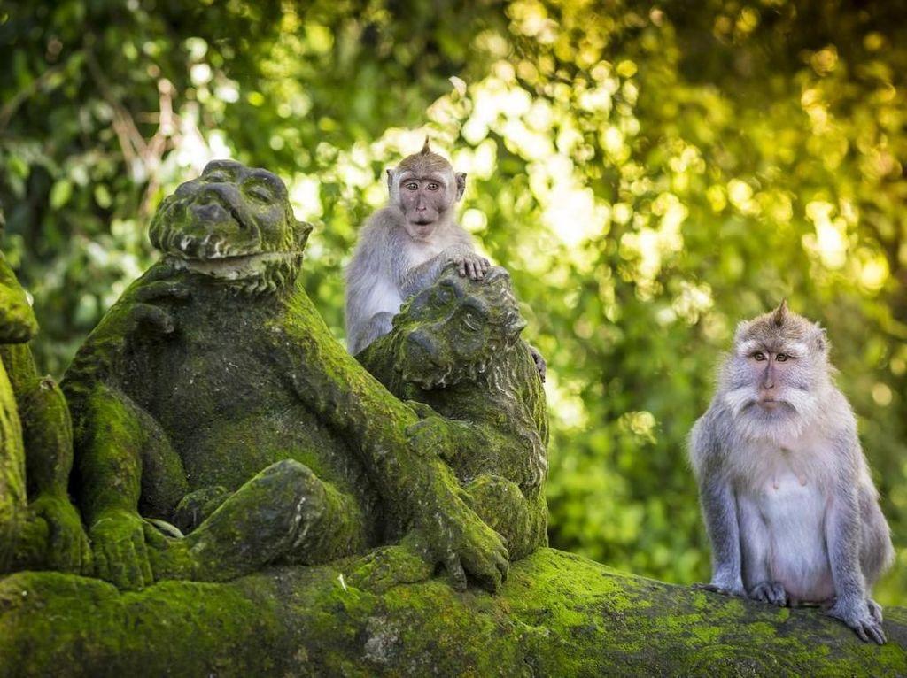 Terindentifikasi di Singapura, Sekilas Soal Cacar Monyet