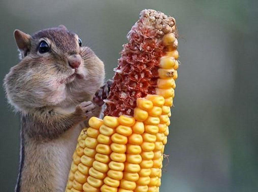 Ekspresi Menggemaskan Saat Hamster hingga Burung Jadi Foodies