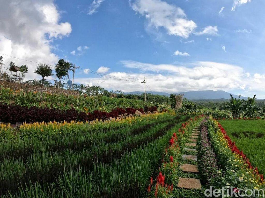 Tempat Wisata Baru di Banyuwangi yang Instagramble