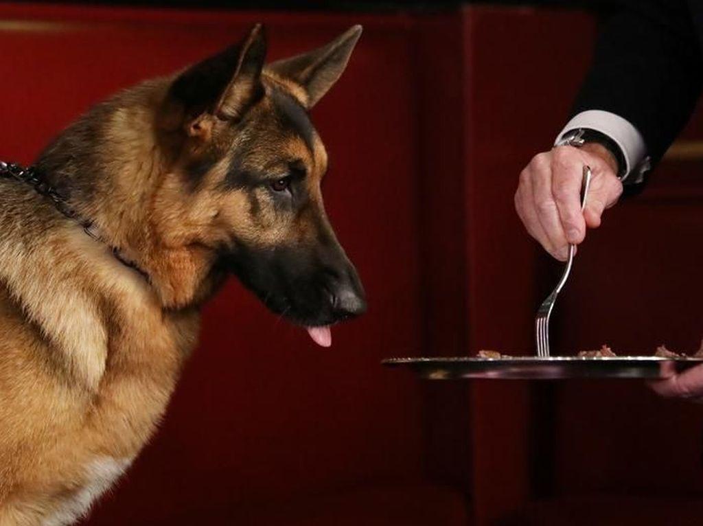 Restoran Ini Tawarkan Menu Khusus Untuk Anjing Termasuk Menu Dietnya