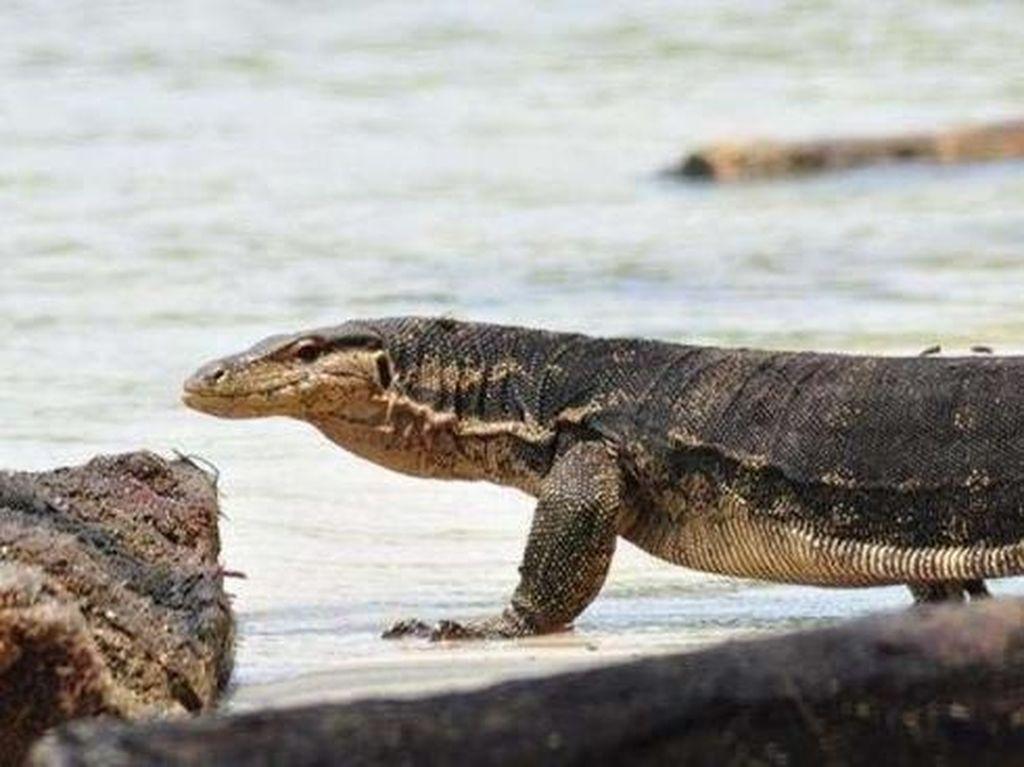 Pulau Biawak di Indramayu Disiapkan Jadi Destinasi Wisata Dunia