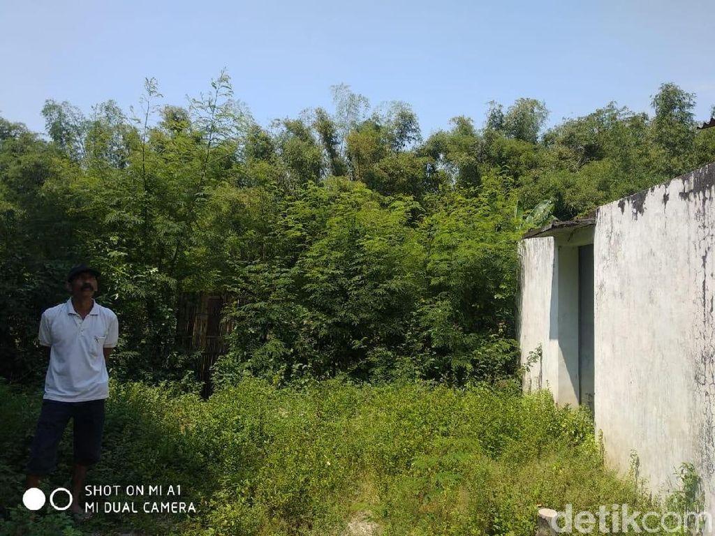 Perangkap akan Dipasang Atasi Serangan Monyet Liar di Probolinggo