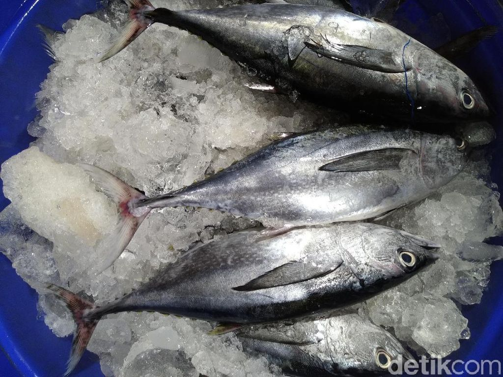 Seperti Ini Ikan dan Seafood Segar yang Dijual di Pasar Ikan Muara Baru