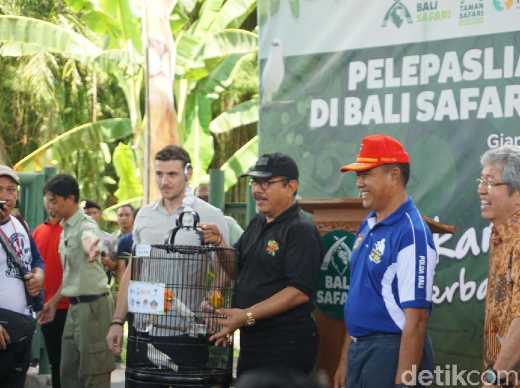 40 Jalak Bali Endemik Pulau Dewata Dilepasliarkan