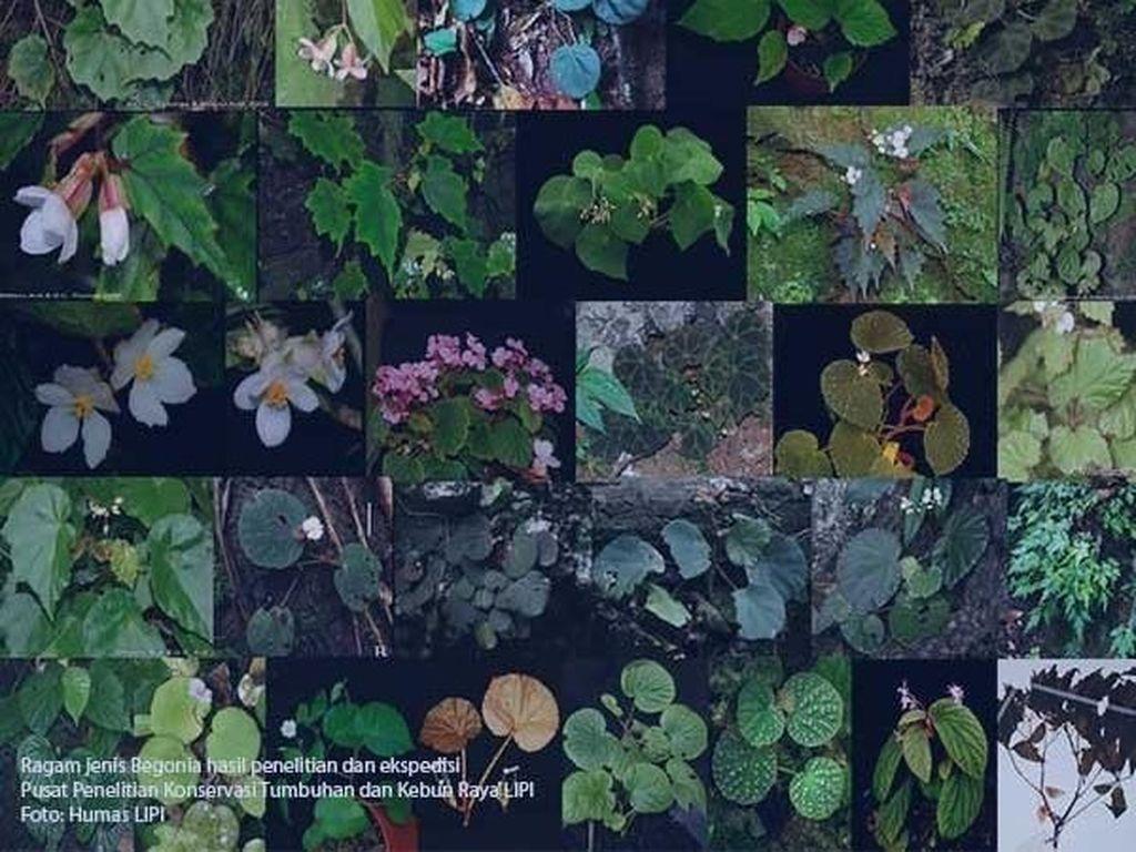 Kebun Raya Bogor Perkenalkan 3 Jenis Baru Tumbuhan, Apa Saja?